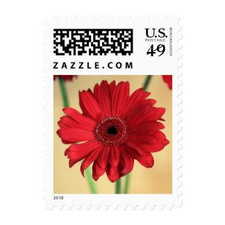 Gerbera Postage Stamps