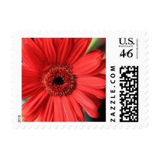 Gerbera Postage Stamp