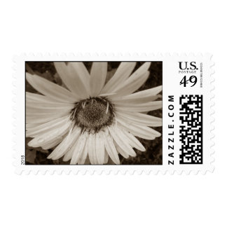 Gerbera Stamps