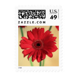 Gerbera Postage Stamps