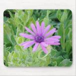 Gerbera púrpura Mousepad floral Alfombrillas De Ratones