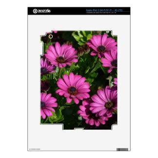 Gerbera rosado iPad 3 skin