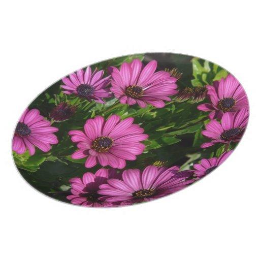 Gerbera rosado platos