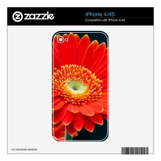 gerbera skin for iPhone 4S