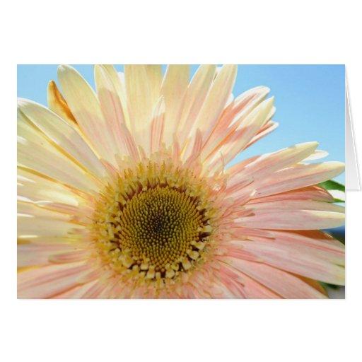 Gerbera y cielo rosados tarjeta de felicitación