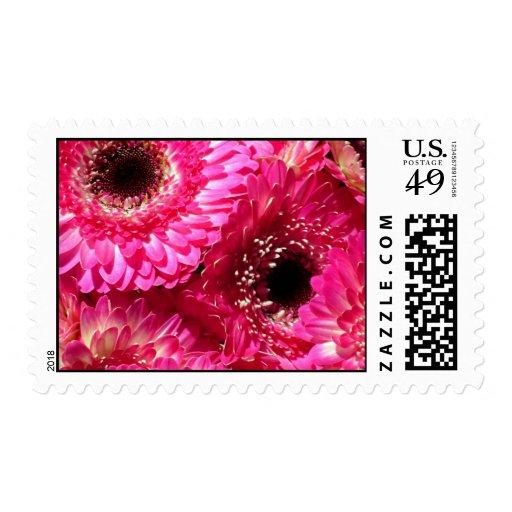 gerberas rosados sello