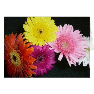 Gerbers coloreados multi tarjeta de felicitación