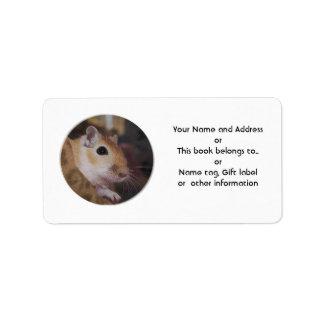 Gerbil de oro lindo del mascota etiqueta de dirección
