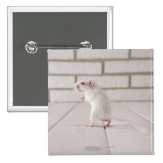 Gerbil standing 2 inch square button