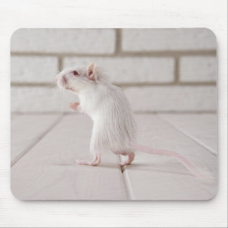 Gerbil standing mouse pad