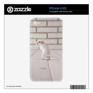 Gerbil standing skin for the iPhone 4