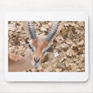 Gerenuk Mouse Pad