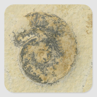 German Ammonite with Dendrites Stickers