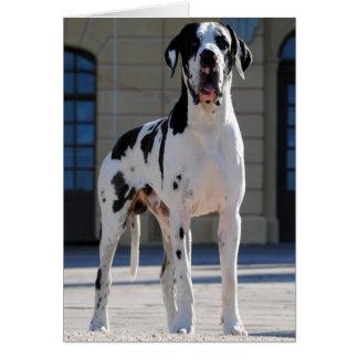 German Dogge, gefleckt, harlequin, great dane, Card