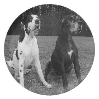 German Dogge, great dane, Hunde, Dogue Allemand Melamine Plate