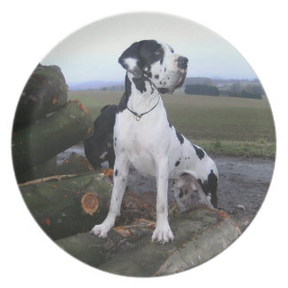 German Dogge, great dane, Hunde, Dogue Allemand Melamine Plate