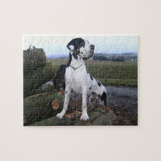 German Dogge, great dane, Hunde, Dogue Allemand Puzzles
