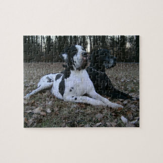 German Dogge, great dane, Hunde, Dogue Allemand Jigsaw Puzzles