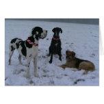 German Dogge, great dane, Hunde, Weihnachten Greeting Card