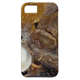 German fruit bread iPhone SE/5/5s case