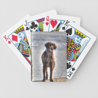German Longhaired Pointer Dog HDR Photo Bicycle Playing Cards