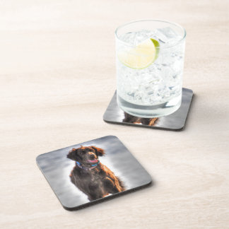 German Longhaired Pointer Dog HDR Photo Drink Coaster