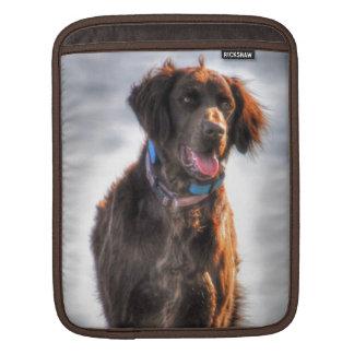 German Longhaired Pointer Dog HDR Photo iPad Sleeve