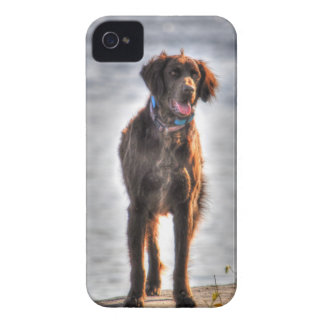 German Longhaired Pointer Dog HDR Photo iPhone 4 Case