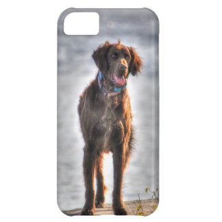 German Longhaired Pointer Dog HDR Photo iPhone 5C Case