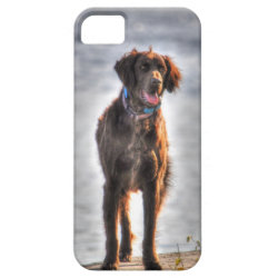 German Longhaired Pointer Dog HDR Photo iPhone SE/5/5s Case