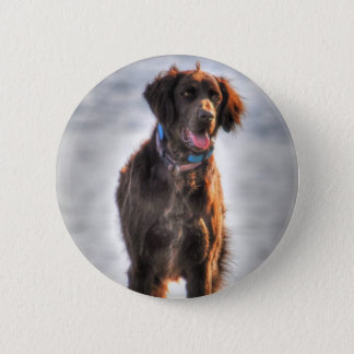 German Longhaired Pointer Dog HDR Photo Pinback Button