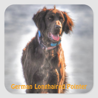 German Longhaired Pointer Dog HDR Photo Square Sticker