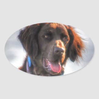 German Longhaired Pointer Dog HDR Photo Sticker