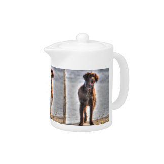 German Longhaired Pointer Dog HDR Photo Teapot