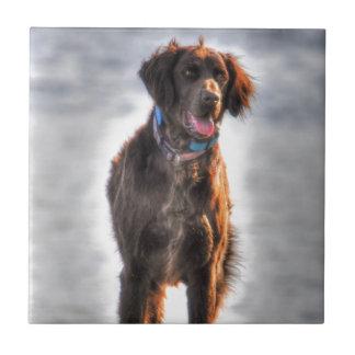 German Longhaired Pointer Dog HDR Photo Tile