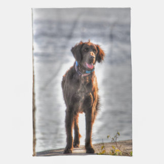 German Longhaired Pointer Dog HDR Photo Towel