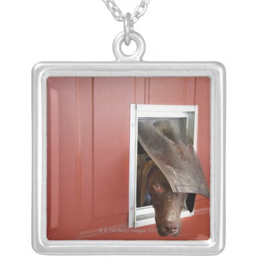 German pointer looking outside, through doggie pendants
