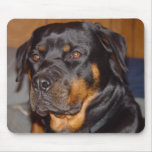 German Rottweiler Mouse Pads