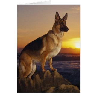 German Shepard At Sunset Card