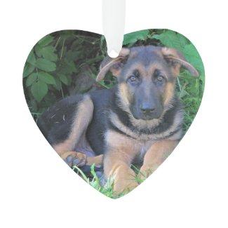 German Sheperd Puppy - id tag