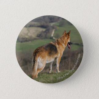 German Shephard Looking Down Hill Button