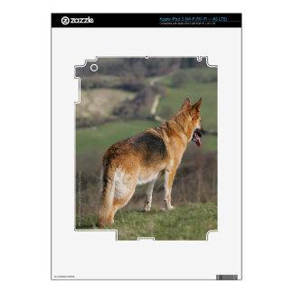 German Shephard Looking Down Hill iPad 3 Skins