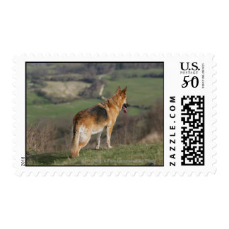 German Shephard Looking Down Hill Postage