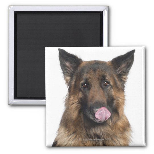 German Shepherd 2 Inch Square Magnet