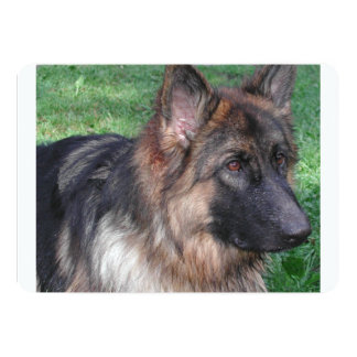 german shepherd 5.png card