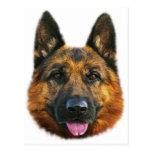 German Shepherd Alsatian K-9 Dog Post Cards