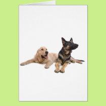 german shepherd and golden retriever card
