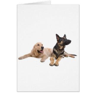 german shepherd and golden retriever tarjeta de felicitación