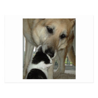 German Shepherd and Kitty Friend Postcard
