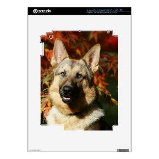 German Shepherd Autumn Leaves iPad 3 Skins